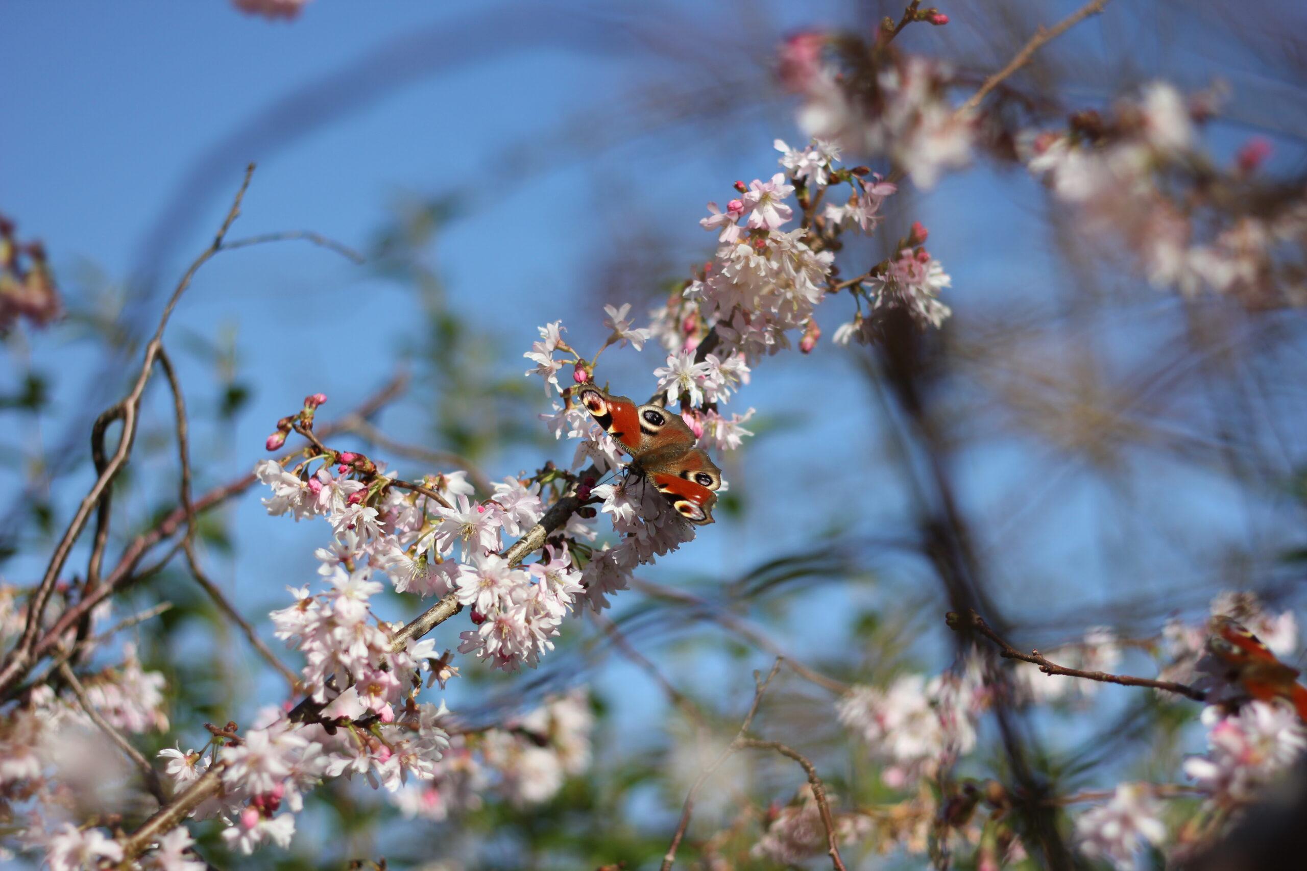 Blossom in Birmingham – job opportunities